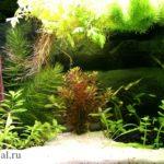 Неприхотливые аквариумные растения виды, описание с фото. Красивый аквариум фото.