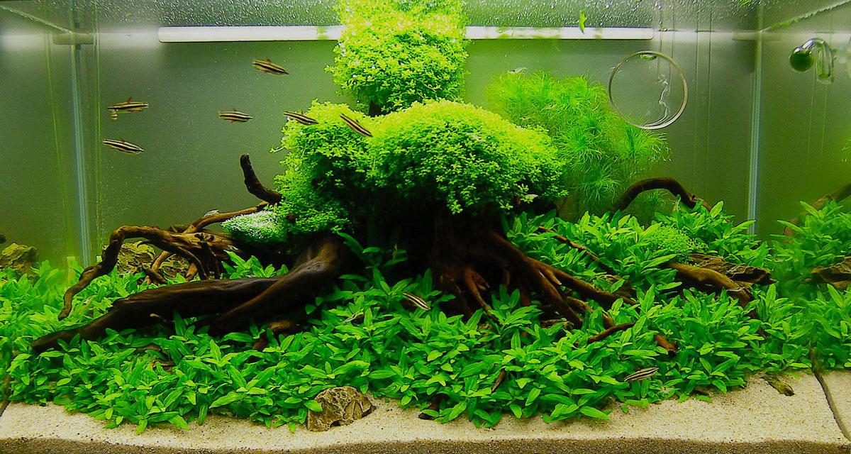 Как посадить аквариумные растения. Аквариумистика. Аквадизайн. Красивый аквариум фото