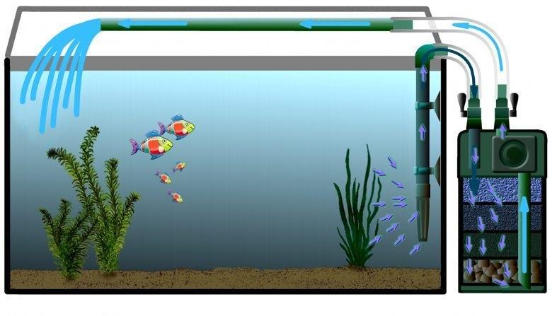 Болезни аквариумных растений. Фильтрация аквариума. Внешний фильтр