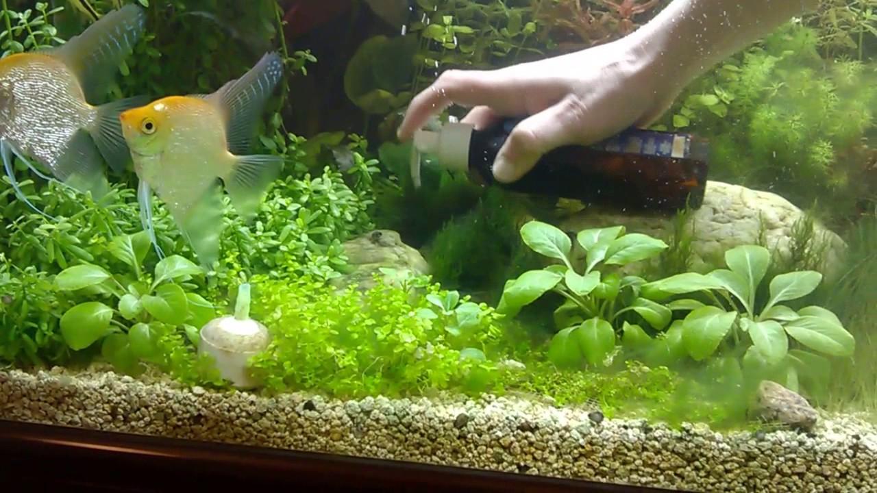 Болезни аквариумных растений. Удобрение аквариумных растений. Дефицит микроэлементов и макроэлементов у аквариумных растений