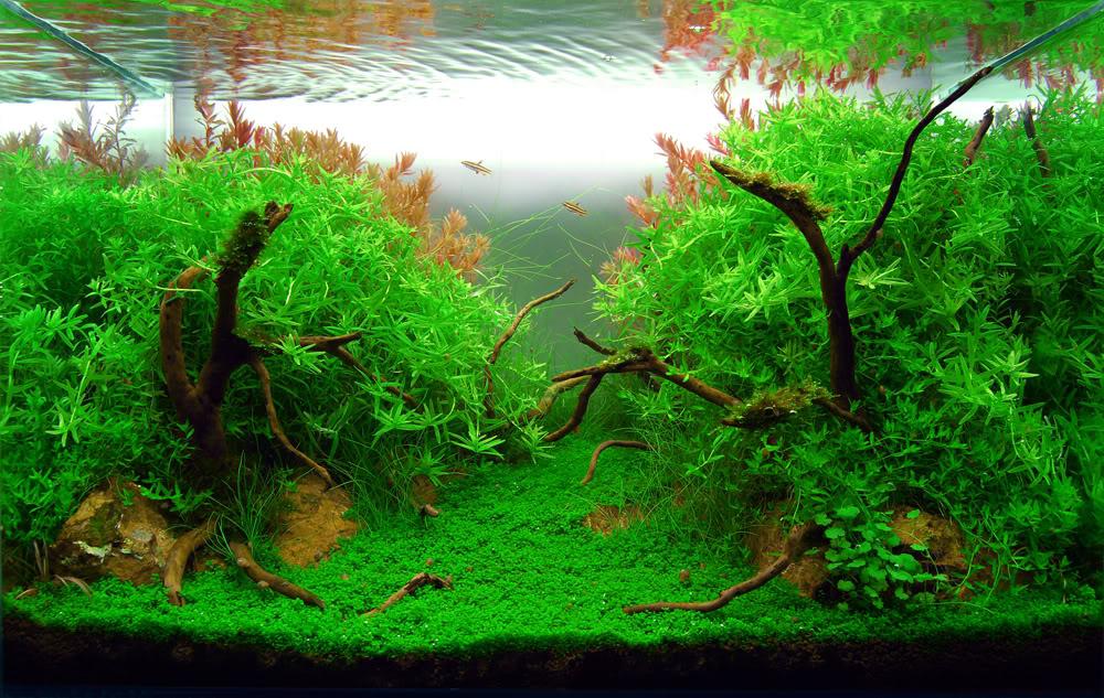 Болезни аквариумных растений.