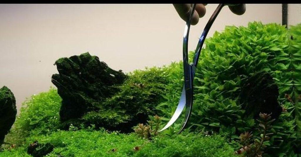 Обрезка аквариумных растений фото. Ножницы для обрезки аквариумных растений.