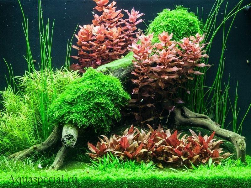 Как подготовить корягу для аквариума. как варить корягу