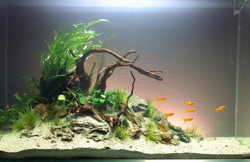 Как подготовить корягу для аквариума? Дизайн аквариума с корягой