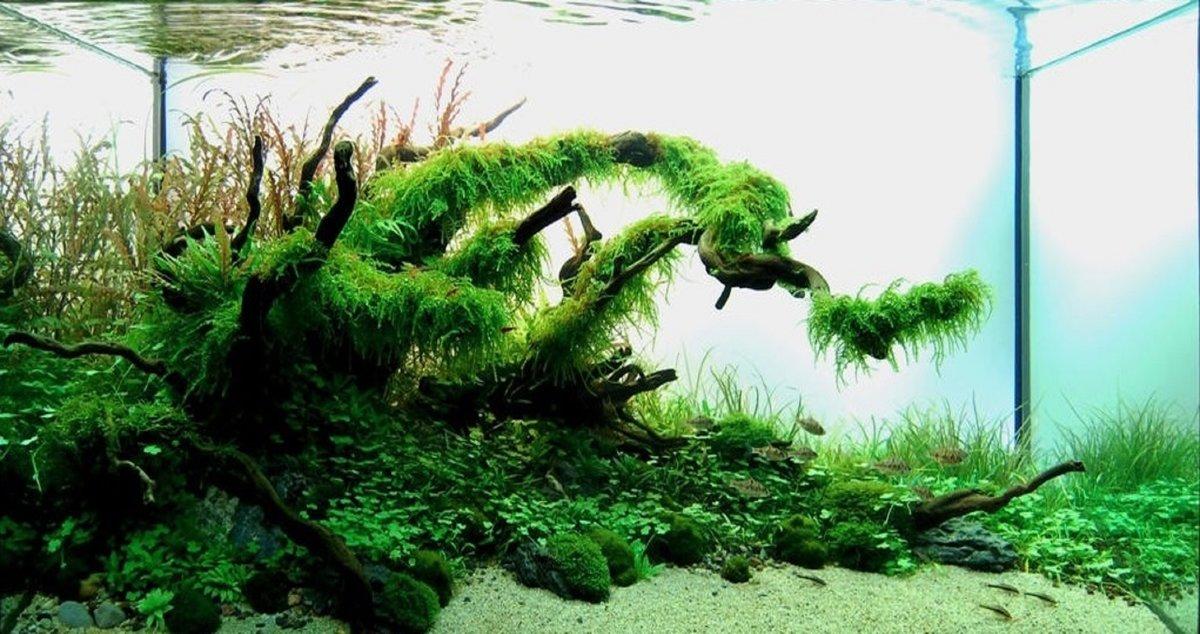 Как подготовить корягу для аквариума? Аквадизайн. Дизайн аквариума.