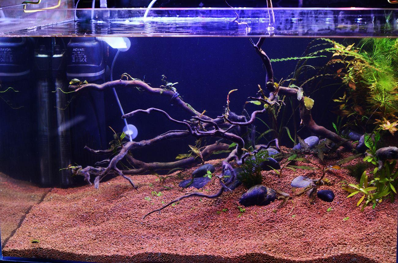 Запуск аквариума. Аквариум с корягами. Дизайн аквариума. Запустить аквариум пошагово