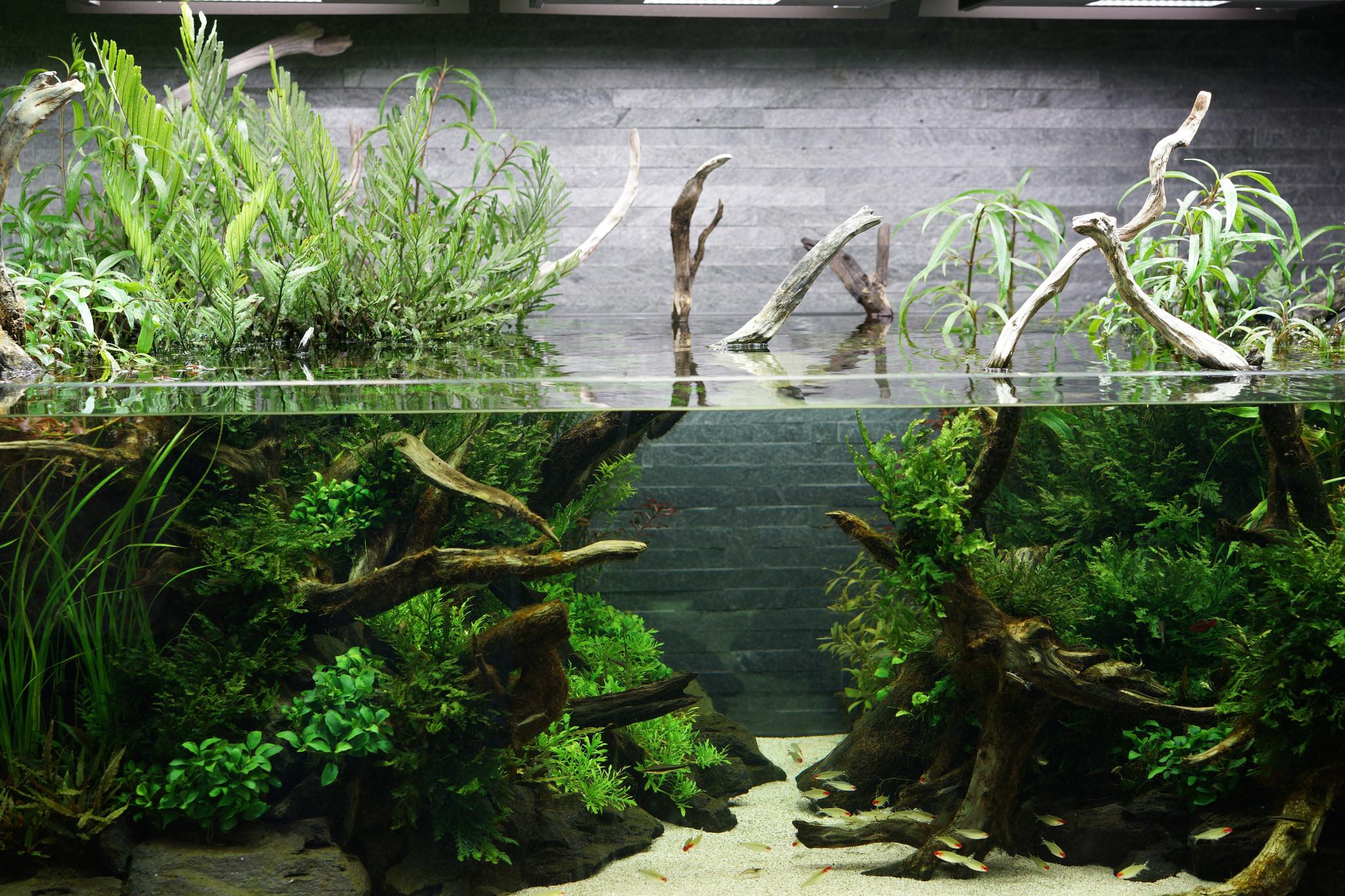 Как подготовить корягу для аквариума? Дизайн аквариума. Аквариум с корягой