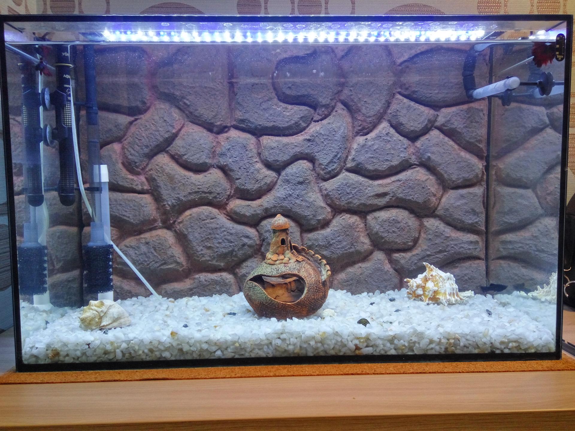 Запуск аквариума. Задний фон для аквариума. Как пошагово запустить аквариум