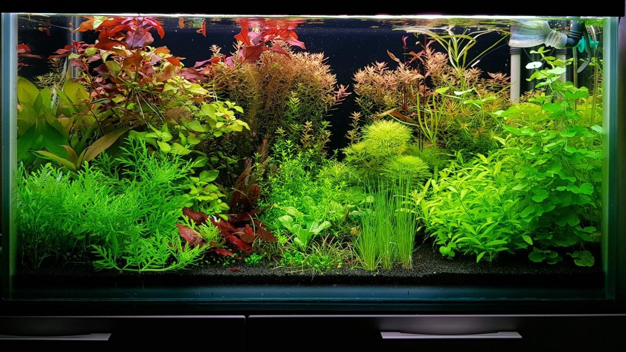Запуск аквариума. Как запустить аквариум с нуля начинающему аквариумисту