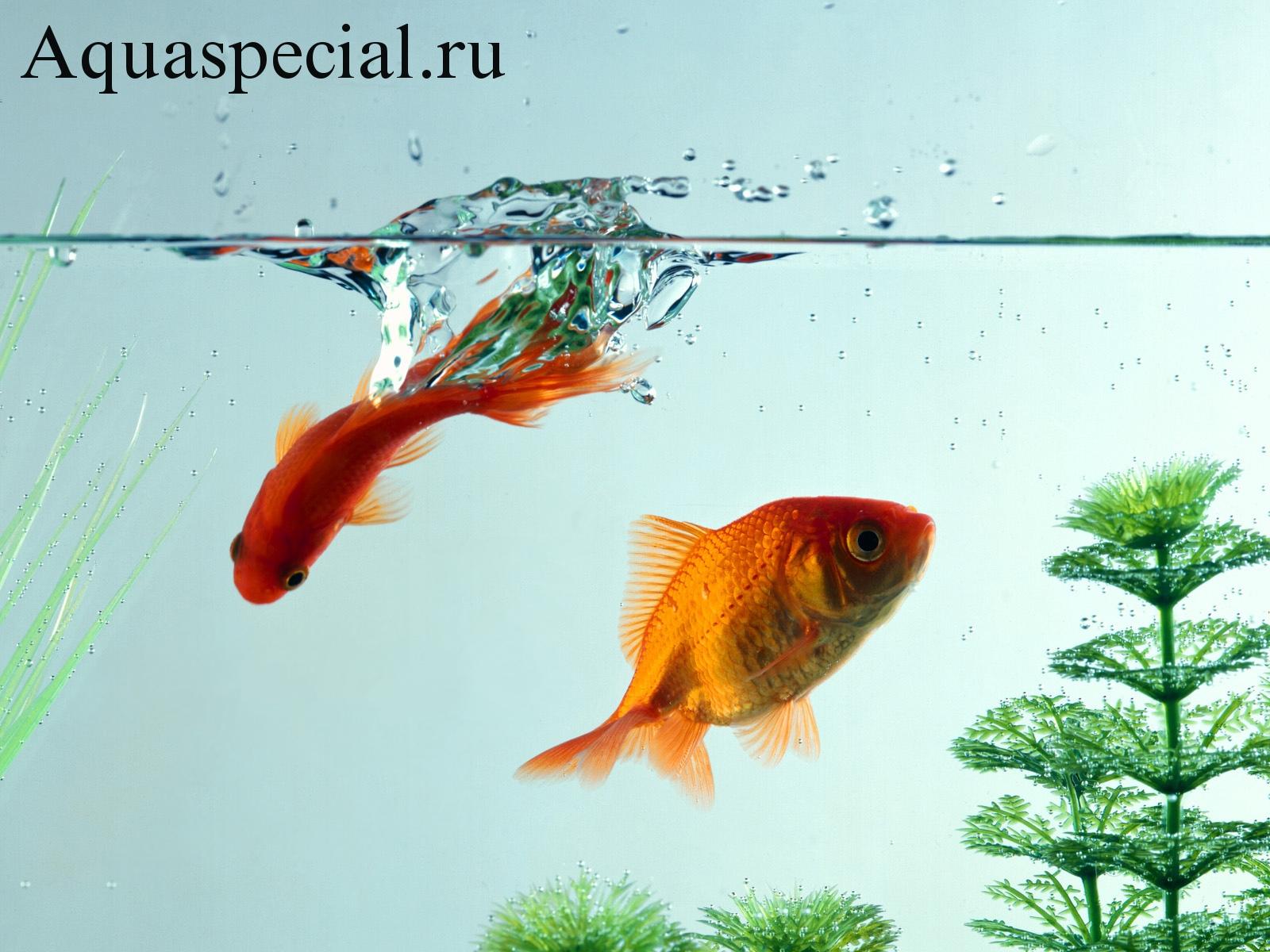 Болезни аквариумных рыбок: Симптомы, лечение