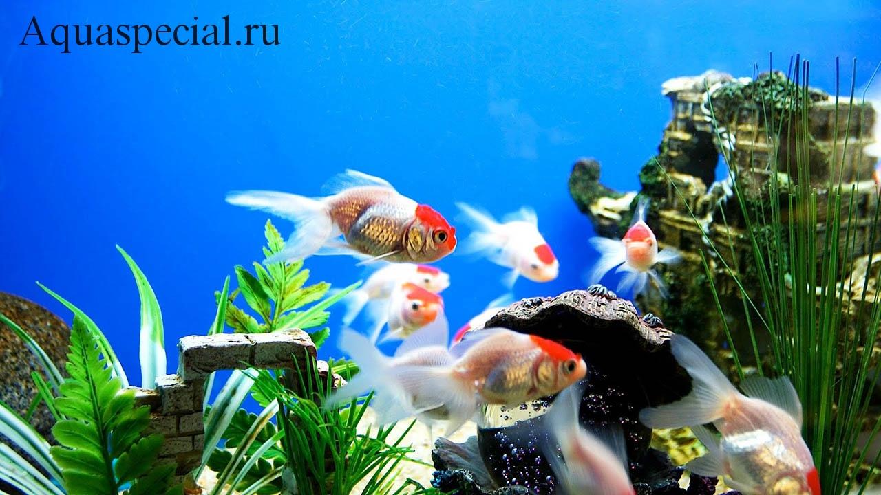 Болезни аквариумных рыбок: Симптомы, лечение. Профилактика заболеваний рыб советы