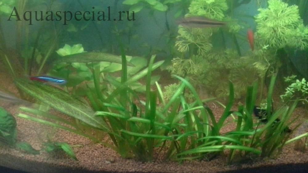 Как почистить аквариум самостоятельно?