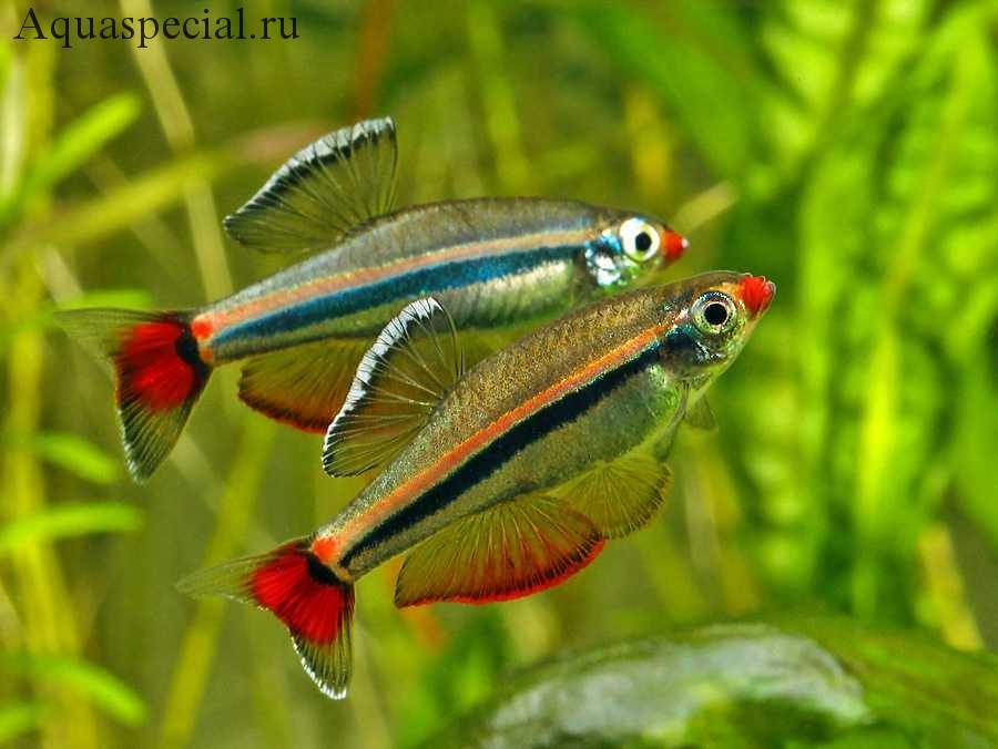 Неприхотливые рыбки для начинающего аквариумиста