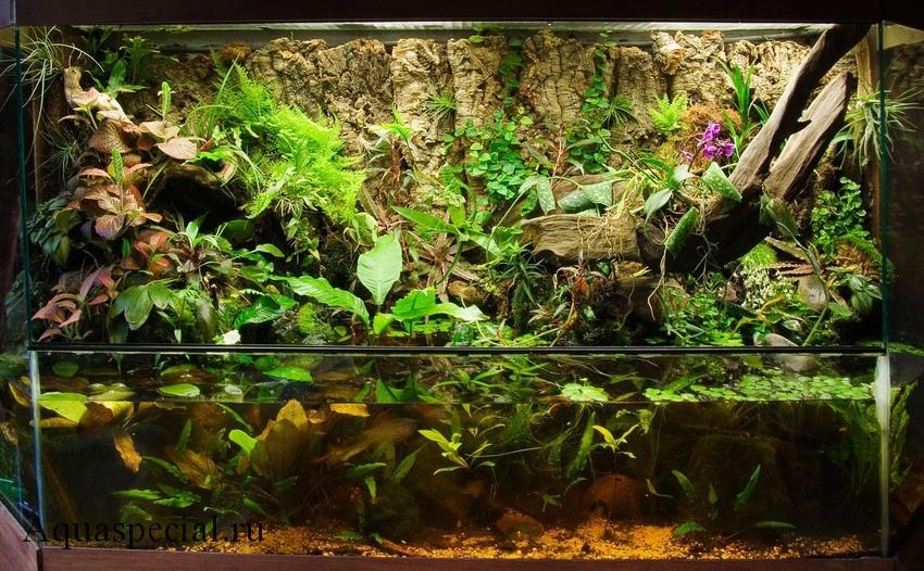 Анубиас в аквариуме содержание, описание с фото. Палюдариум