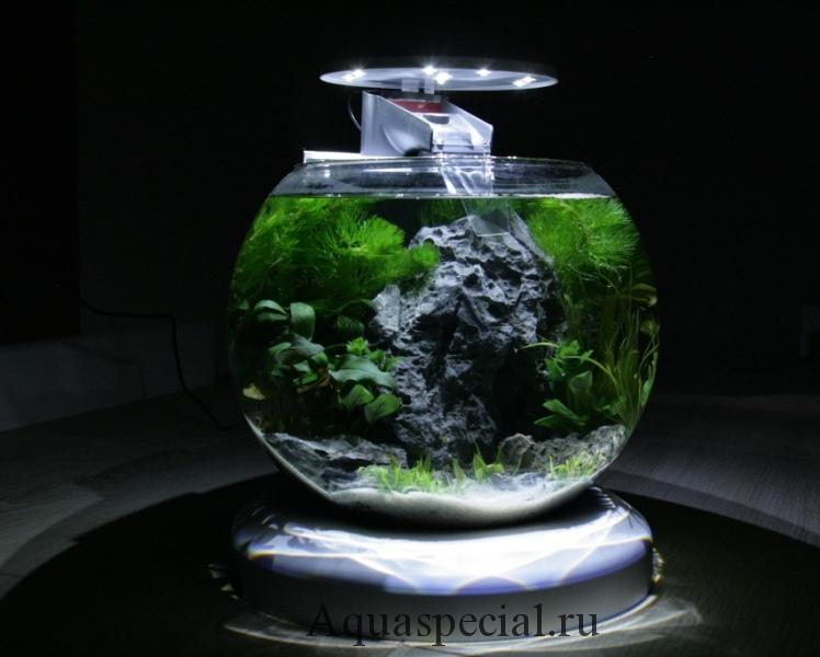 Дизайн круглого аквариума фото. Круглый аквариум с камнями и подсветкой