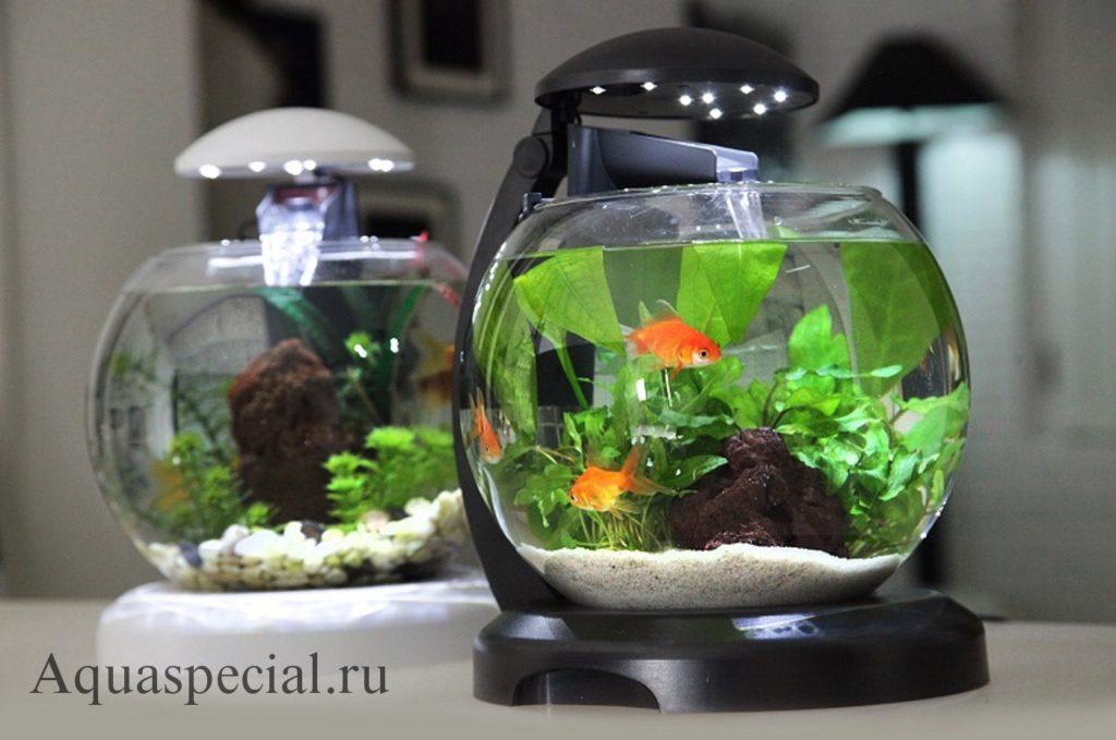 Круглый аквариум с золотой рыбкой фото. Каких рыбок нельзя держать в круглом аквариуме