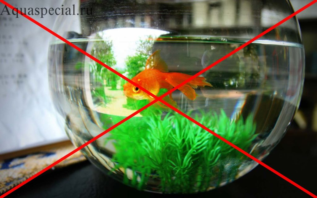 Золотая рыбка в круглом аквариуме. Почему нельзя держать