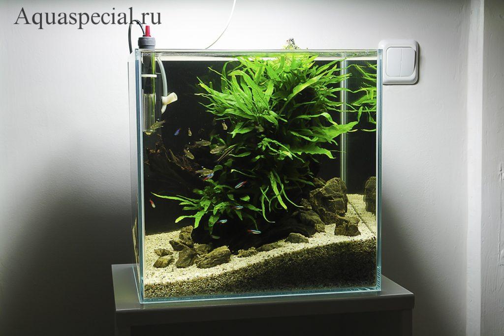 Кого заселить в нано аквариум. Неоны в нано кубе фото