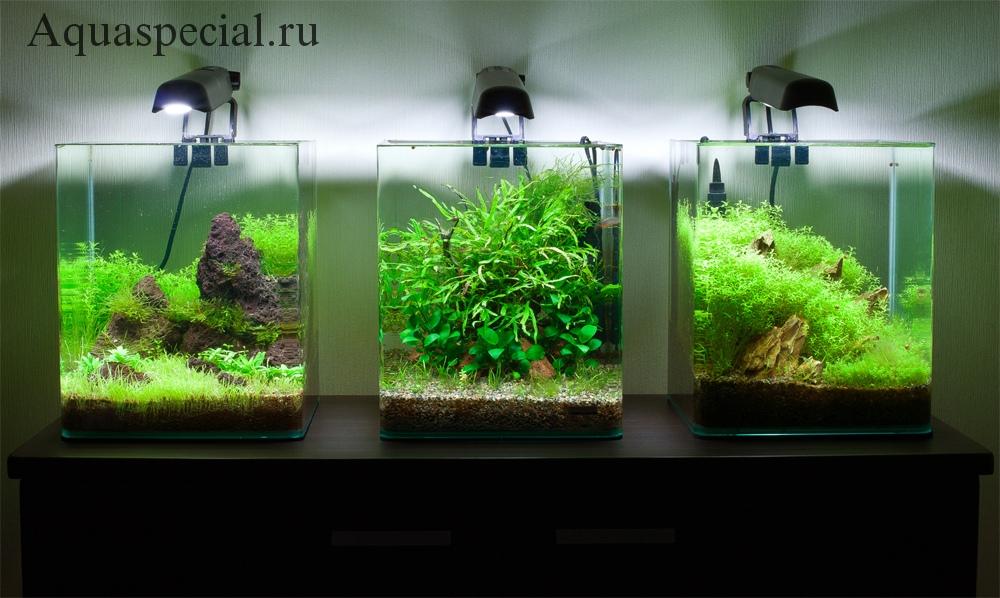 Как выбрать нано аквариум. Дизайн нано аквариума с камнями фото