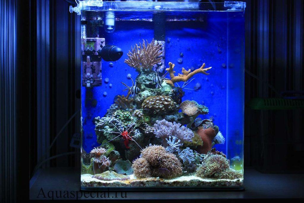 Псевдоморе фото. Нано аквариум с кораллами как запустить видео