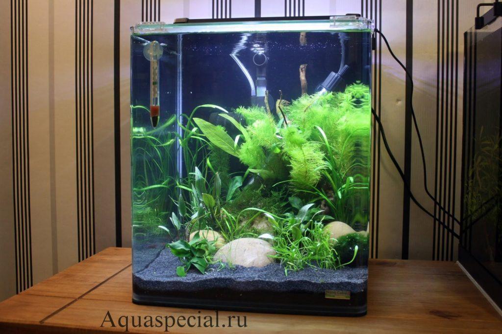 Как ухаживать за нано аквариумом 10, 20, 25, 35 л. Роголистник фото в аквариуме