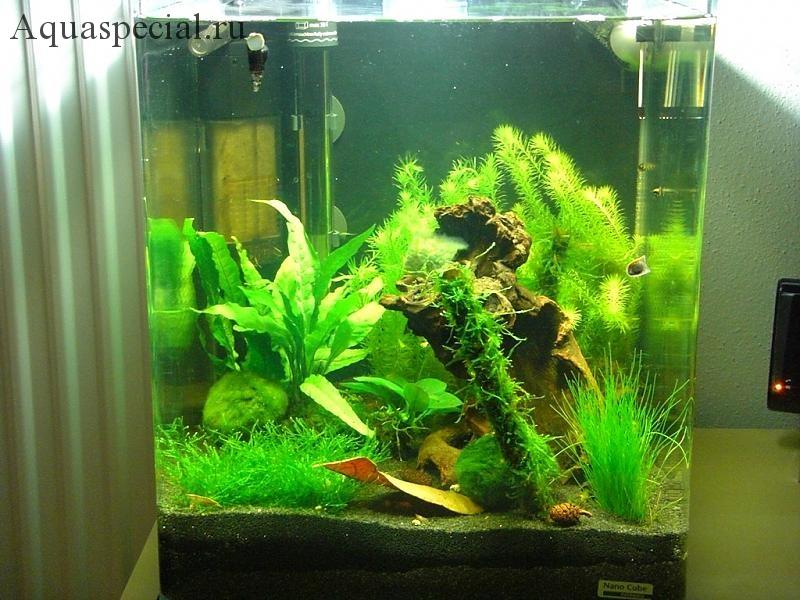 Нано аквариум фото. Растения для нано аквариума какие подойдут
