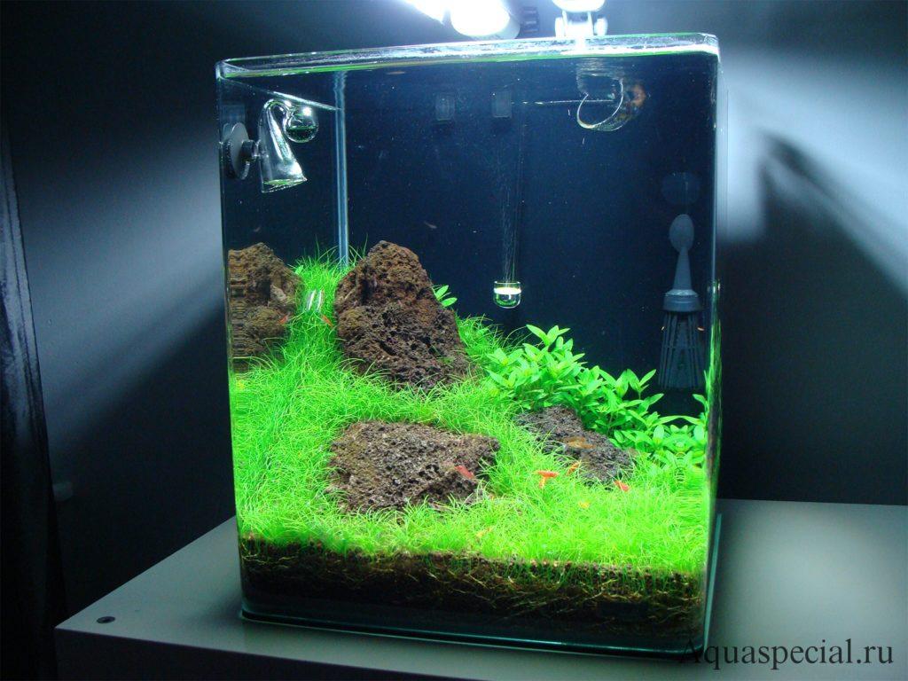 Акваскейп фото. Ноно аквариум с креветками. Дизайн нано куба