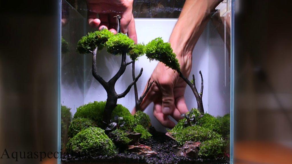 Как запустить нано аквариум пошагово. Запуск нано куба поэтапно фото