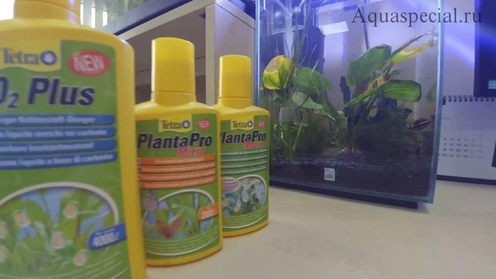 Подкормка аквариумных растений зачем нужна. Нехватка макро и микро элементов