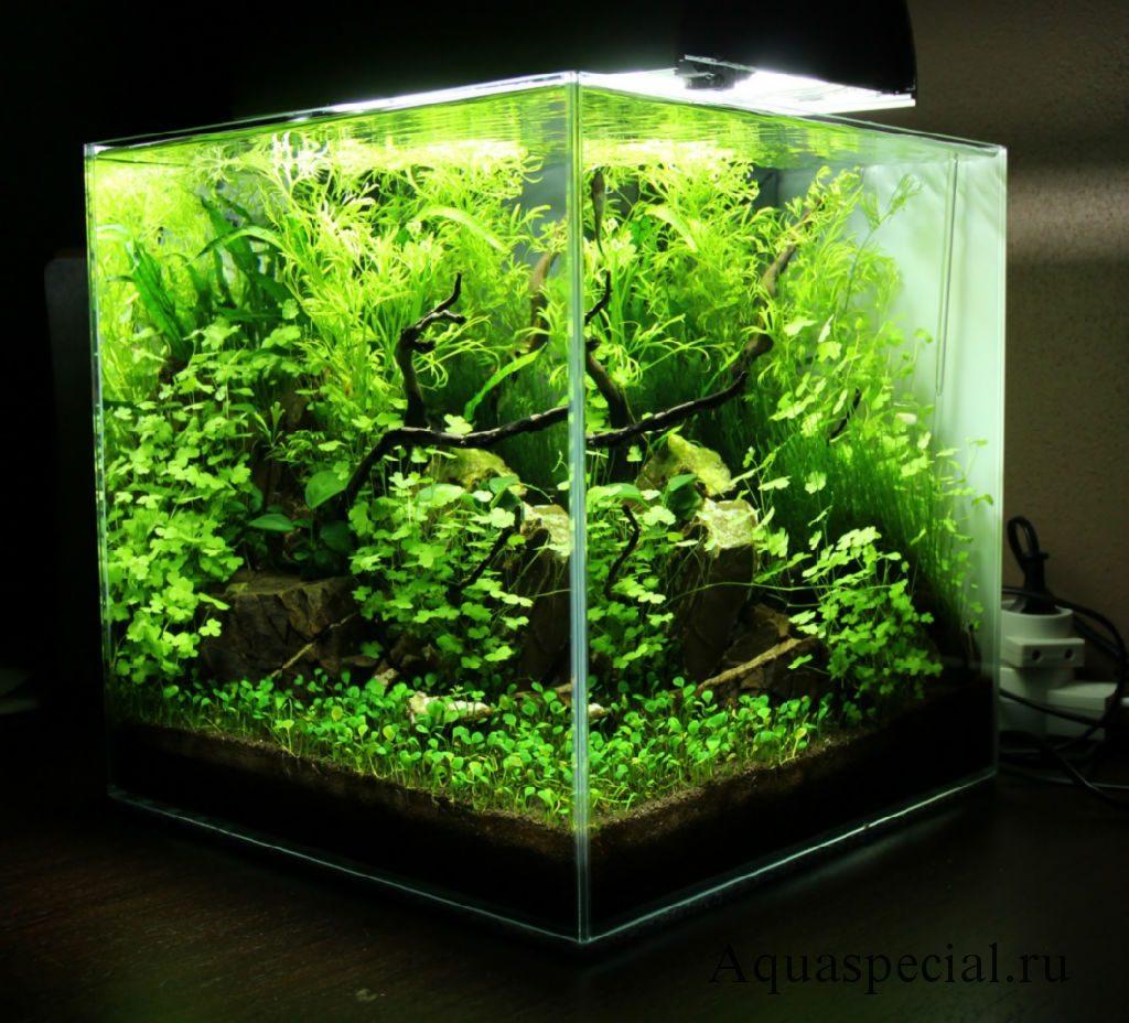 Марсилия передний план нано аквариум. Нано куб фото