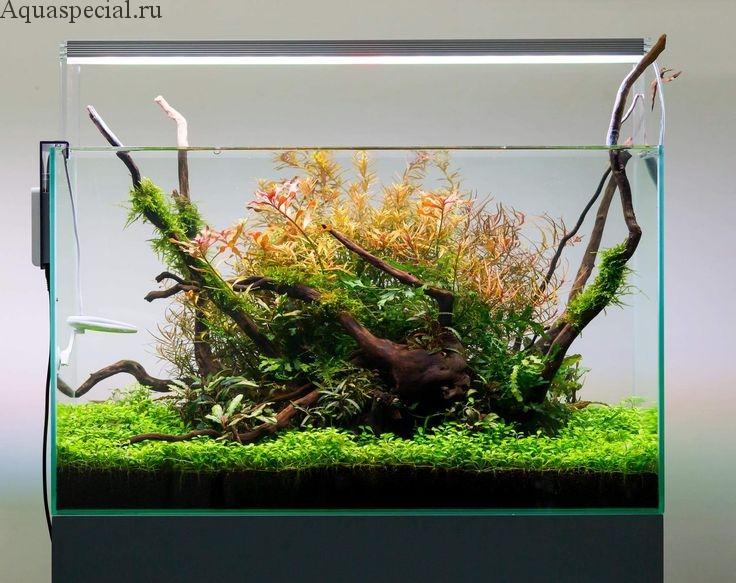 Как правильно выбрать освещение для аквариума