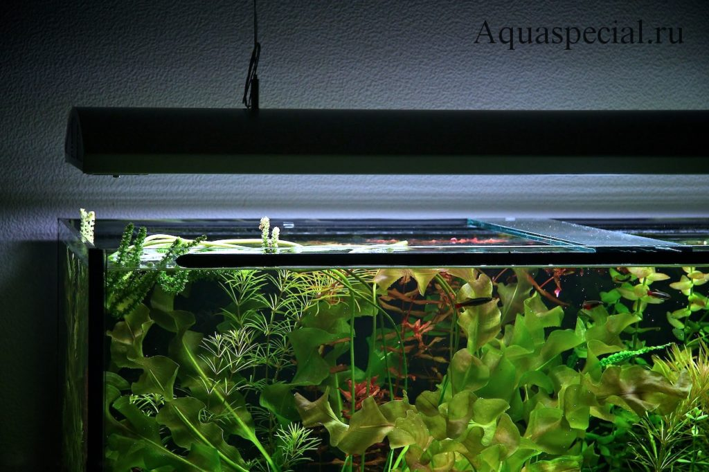 Светильник для аквариума. Светодиодная лампа