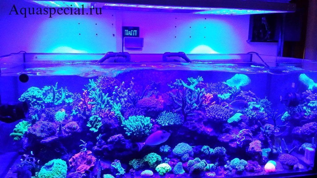 Неоновая подсветка для аквариума.  Декоративная подсветка для аквариума. Синяя лампа для аквариума