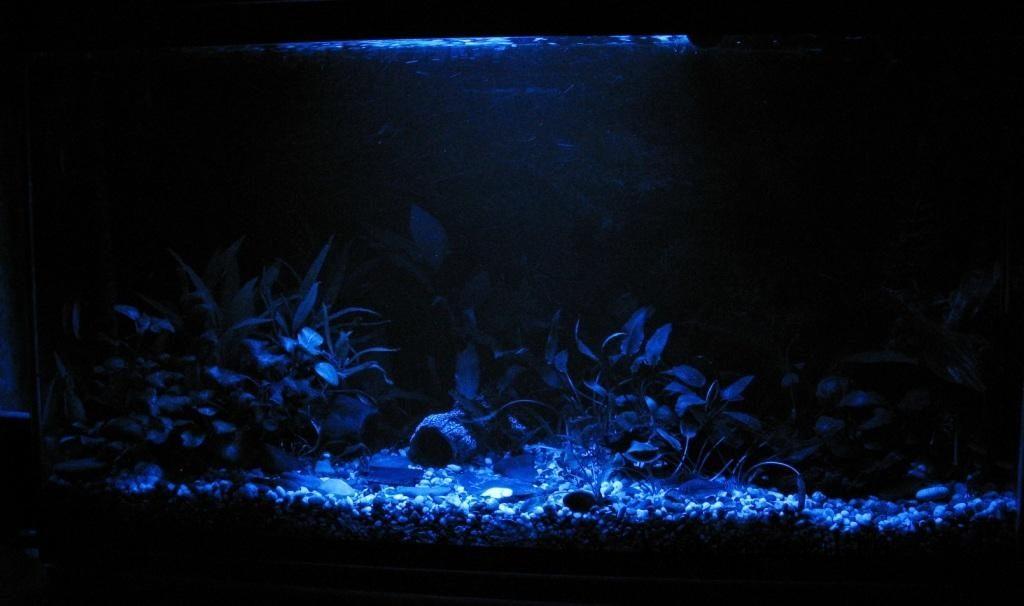 Ночная подсветка для аквариума. Ночной аквариум