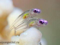 Самые странные и необычные аквариумные рыбки на акваспешиал ру. Топ странных рыб с описанием и фото