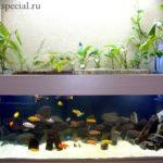 Фитофильтр для аквариума своими руками инструкция