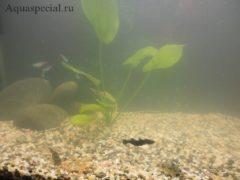 Почему мутнеет вода в аквариуме: причины, методы борьбы. Мутная вода в аквариуме: почему, что делать
