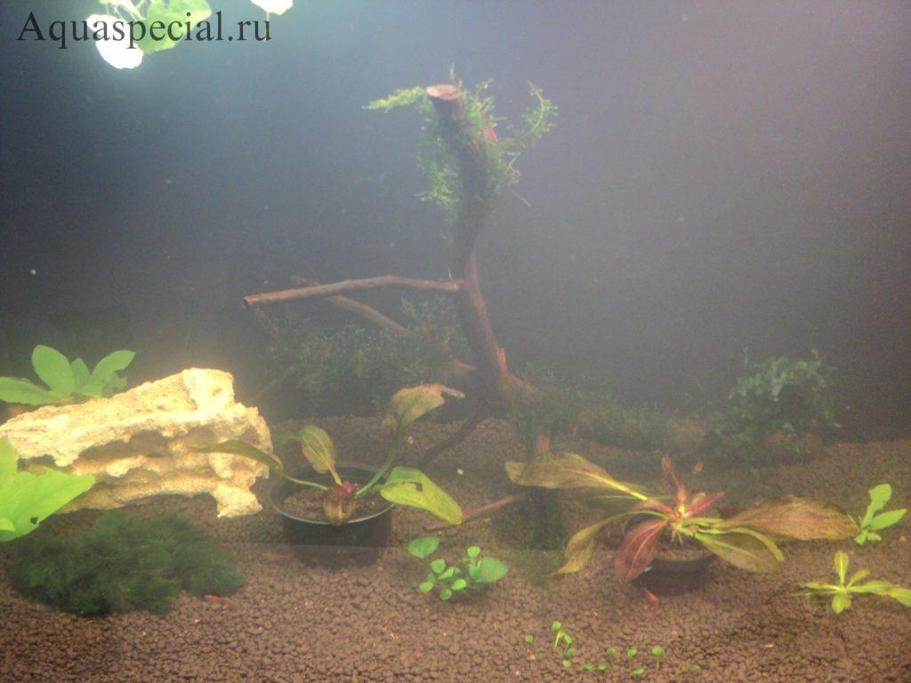 Мутнеет вода после запуска. Мутная вода в аквариуме: причины, что делать. Помутнел аквариум, мутный аквариум