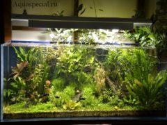 Биофильтр для аквариума своими руками. Фильтр для аквариума своими руками. Красивый аквариум