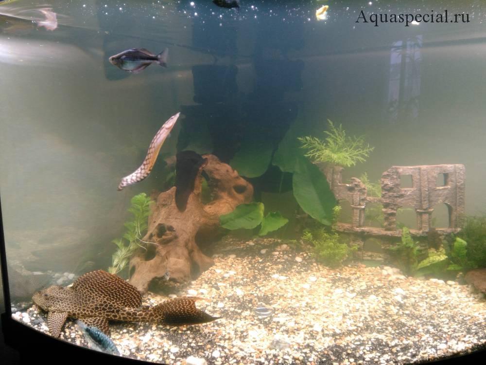 Мутнеет вода после запуска. Бактериальная вспышка в аквариуме. Мутная вода причины