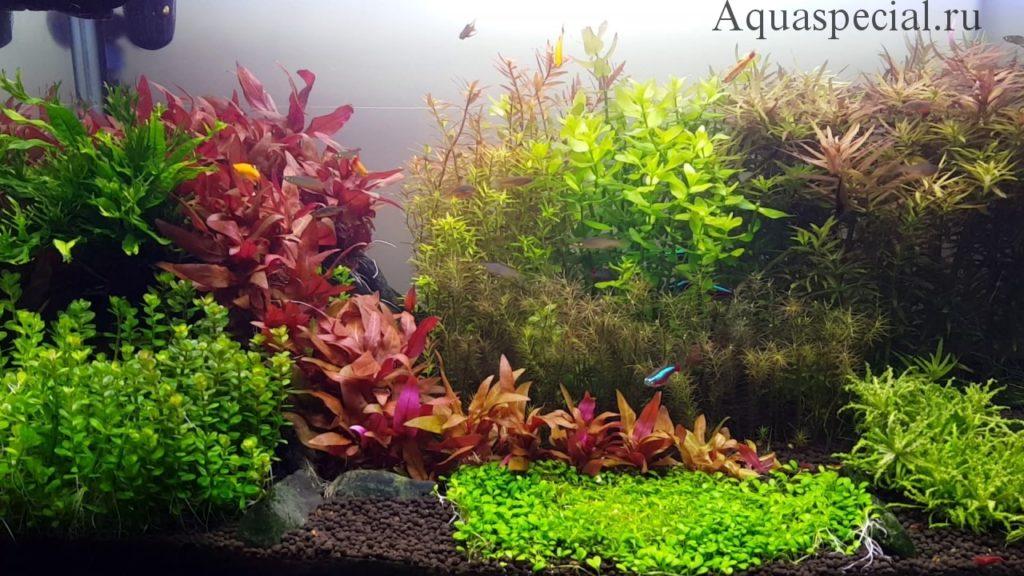 Аквариум в голландском стиле фото. Красивый аквариум