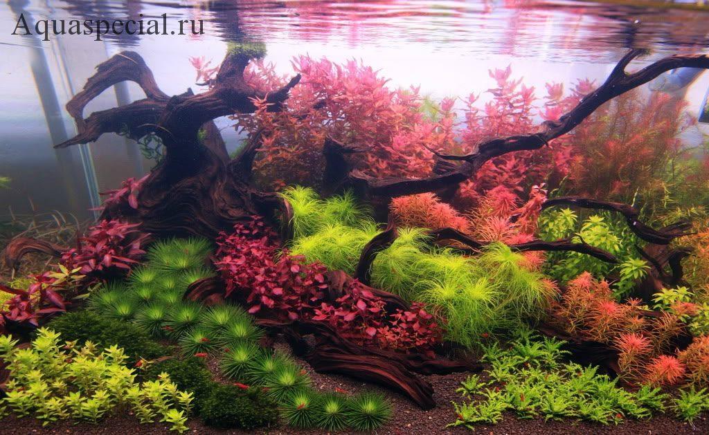 Аквариум с растениями и корягой