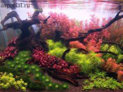 Голландский стиль оформления аквариума схема посадки растений