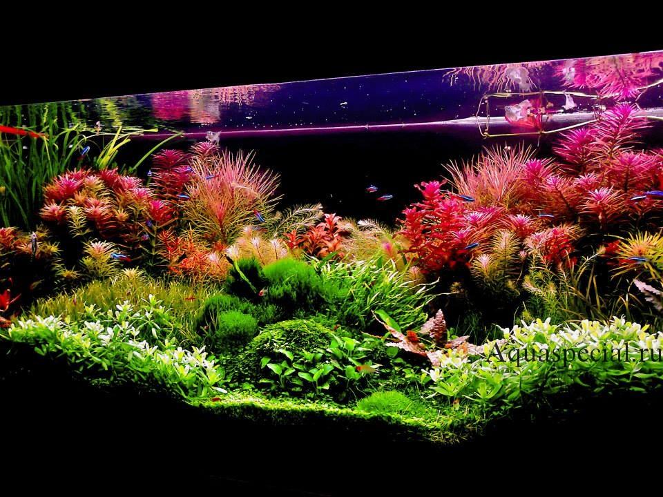 Схема посадки растений. Дизайн акваскейпа