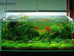 Аквариум своими руками в домашних условиях. Как склеить аквариум самостоятельно пошагово