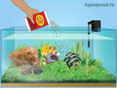 Корм для рыбок,какой выбрать, правила кормления