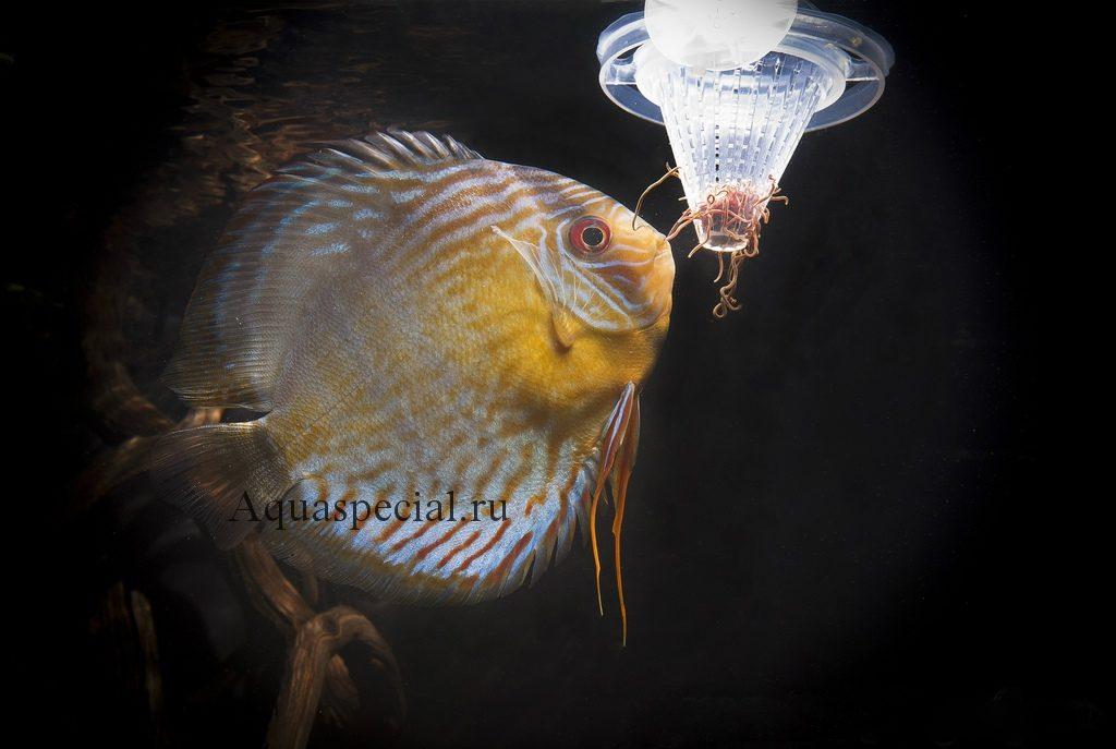 Кормушка для живого корма. Рыбка дискус