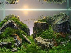 Природный аквариум. Дизайн аквариума, акаскейп
