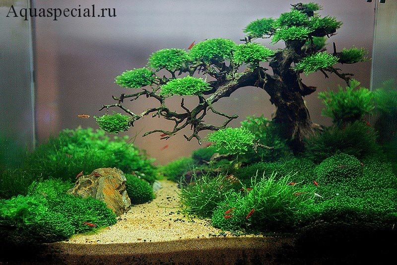 Стиль риобоку в дизайне акваскейпа в природном стиле