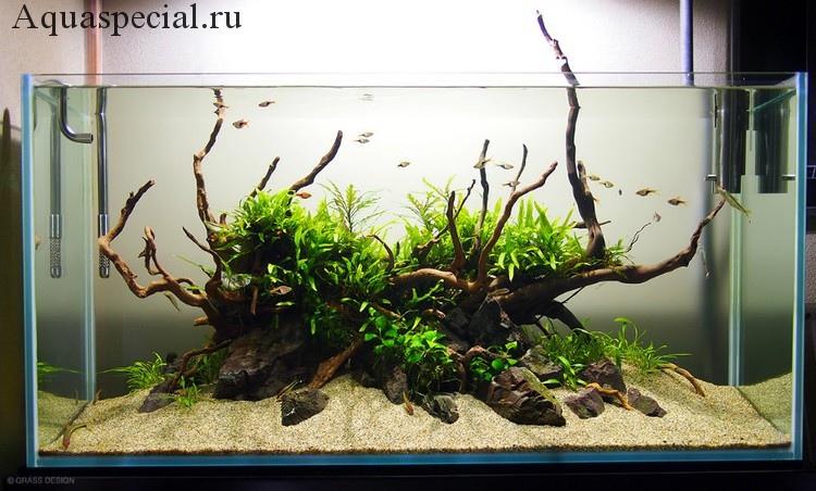 Тип композиции остров акваскейп. Дизайн аквариума с корягами